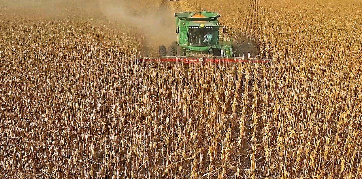Se largó la cosecha de maíz y la soja ya empezó a llegar a Rosario